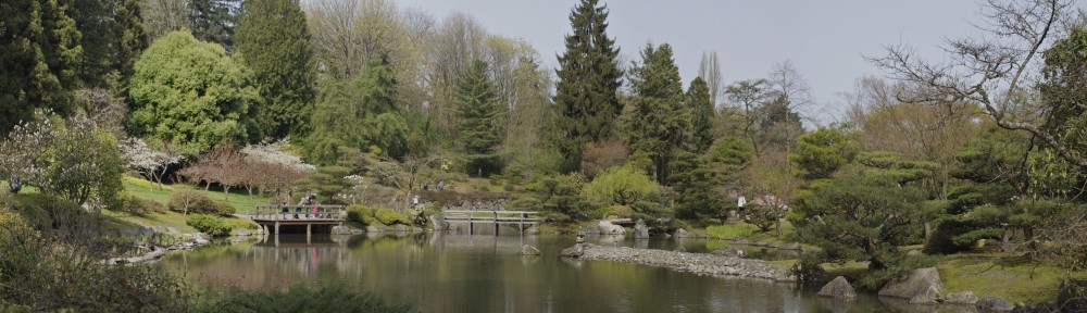 Seattle Japanese Garden Panorama